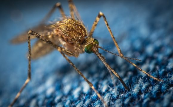 Malaria- czym charakteryzuje się choroba?